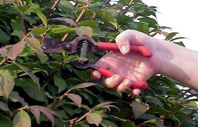 Kellyville Lawn Mowing Pruning Services